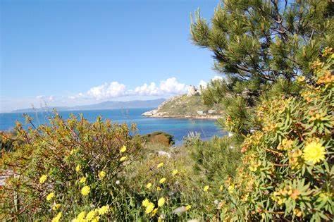 Macchia Mediterranea: clima, fiori e animali tipici